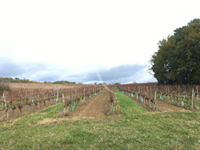 Vignes appellation Bordeaux 4,4 hectares - Doulezon